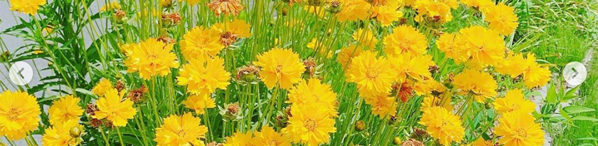 施設内の花 写真